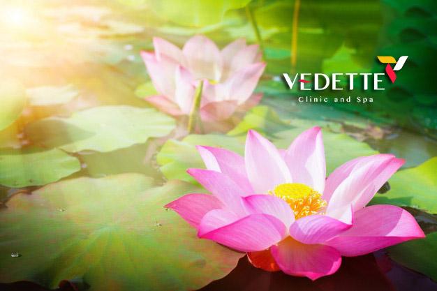 beautiful pink lotus flower nature with sunrise background 55716 988 1